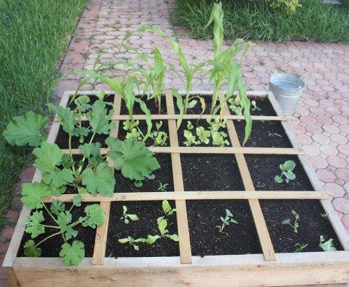 jardinage_carre_courgettes_melon_mais_salades