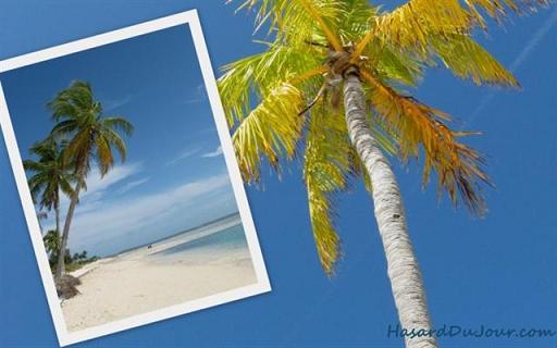 montage-miami-palmier-plage